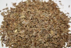 Как принимать семена укропа при запоре: отвар, настой, укропная водичка