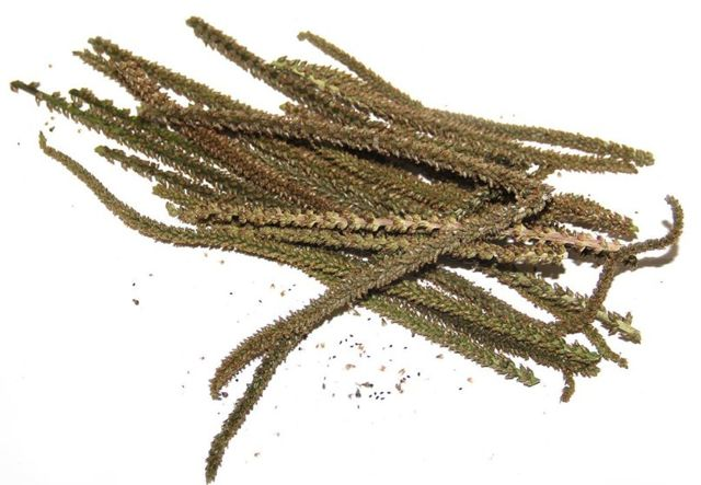 Как принимать семена подорожника при запоре