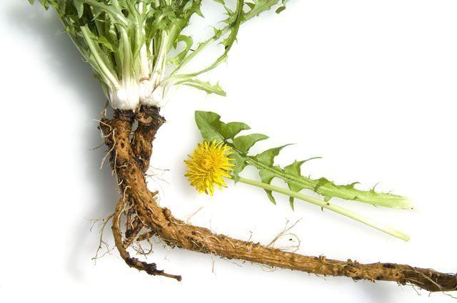 Лекарственные слабительные травы при запорах: обзор эффективных растений
