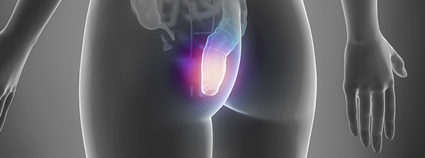 Причины появления пульсации в области заднего прохода и прямой кишки