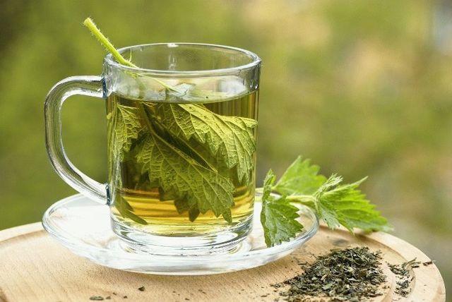 Крапива для лечения геморроя: отвар, ванночка, клизма, примочка и мазь, чай