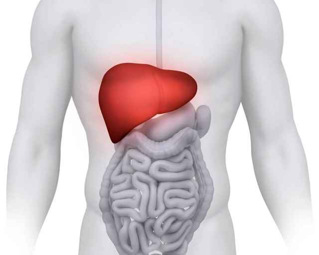 Криптогенный гепатит: что это такое, код по МКБ 10, симптомы при минимальной, умеренной и выраженной степенью активности, лечение, прогноз