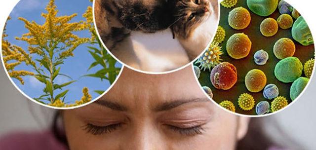 Аллергия на лице при беременности: причины и лечение, влияние на маму и ребенка