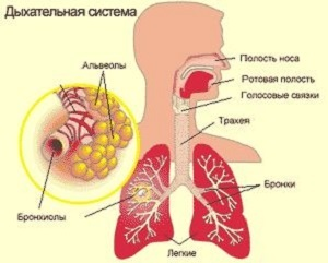 Что делать, если после бронхита у ребенка не проходит кашель