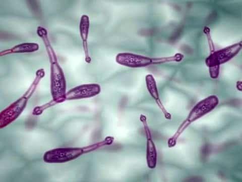 Киста печени: что это такое, код по МКБ 10, причины возникновения, лечение, чем опасно паразитарное (эхинококковое) новообразование, народные средства