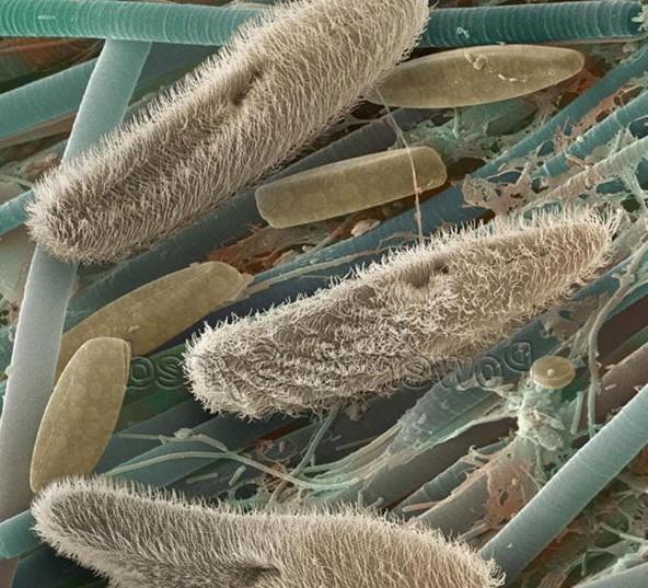 Этиология бронхита: причины и особенности заболевания