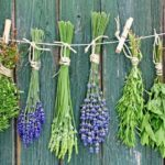 Противогрибковые травы в народной медицине: наружные средства и препараты для приема внутрь
