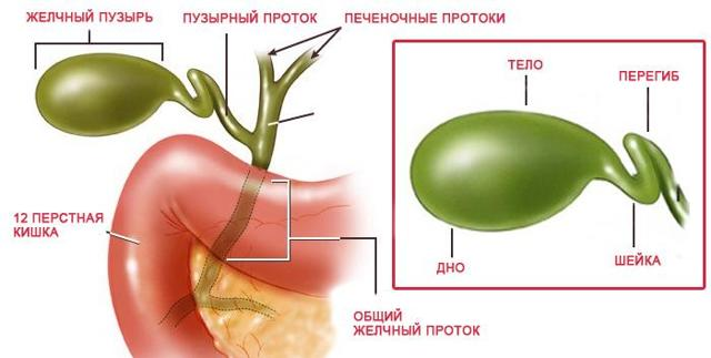Перегиб желчного пузыря: симптомы, лечение, виды и образ жизни