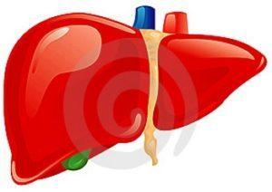 Реактивный гепатит: что это такое, код МКБ 10, симптомы, причины заболевания, почему бывает у детей, лечение и прогноз