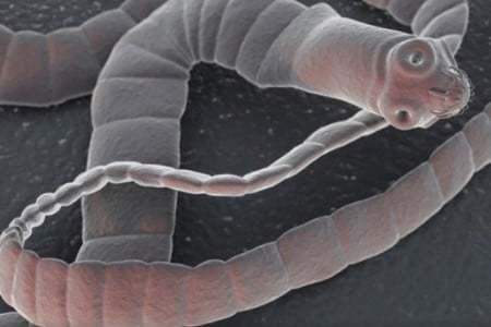 Папилломы и паразиты: есть ли связь между новообразованиями и поражением гельминтами