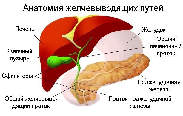 Дисфункция желчного пузыря: симптомы и лечение