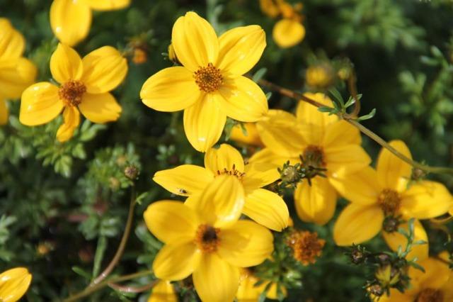 Травы от псориаза: эффективные рецепты для внутреннего и наружного применения