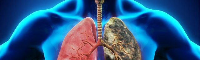 Лечение туберкулеза народными средствами: как и что использовать