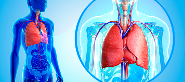 Метастазы в легких: причины образования