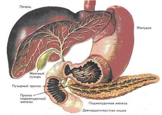 Холецистопанкреатит: симптомы острой формы, хронический процесс, код МКБ, медикаментозное лечение взрослых, питание, диета в период обострения, список продуктов